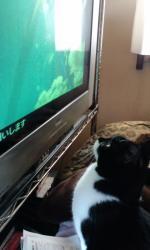 テレビねこ