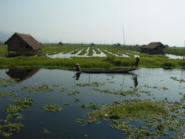 インレー湖の浮畑農耕景観