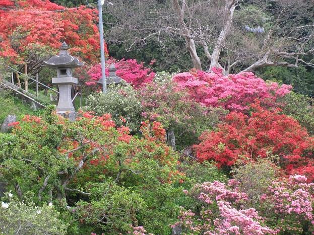 五大尊つつじ公園20110506