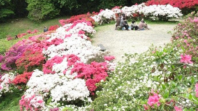 五大尊つつじ公園20110506⑧