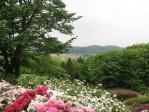 五大尊つつじ公園20110506⑬