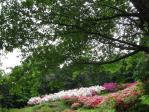 五大尊つつじ公園20110506⑭