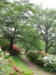 五大尊つつじ公園20110506⑰