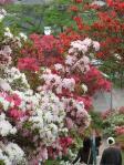 五大尊つつじ公園20110506C