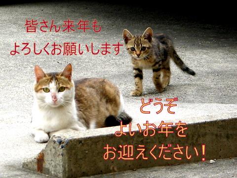 IMG_7489-1.jpg