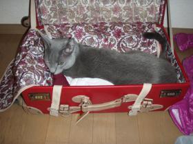 荷造りを阻止
