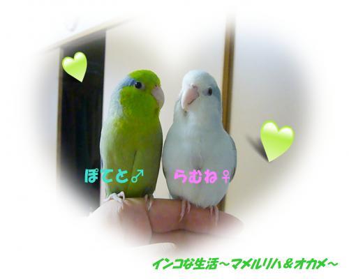 P1060931_convert_20130119010448.jpg