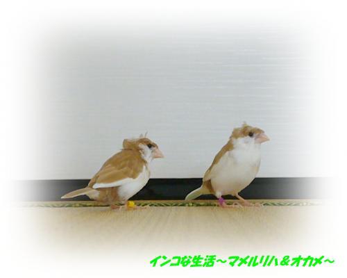 P1070773_convert_20130130113722.jpg