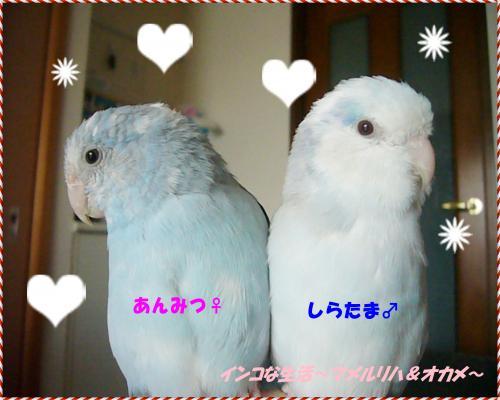 P1070883_convert_20130119010239.jpg