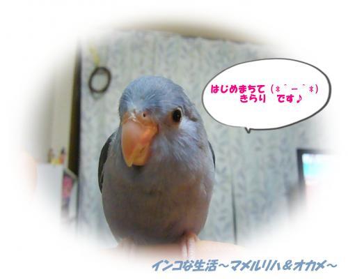 P1080026_convert_20130210081537.jpg