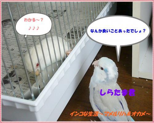 P1080073_convert_20130210081616.jpg