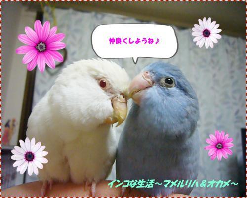 P1080082_convert_20130210081719.jpg