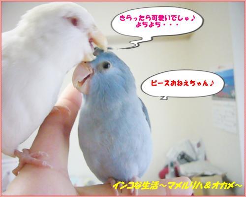 P1080125_convert_20130309210517.jpg