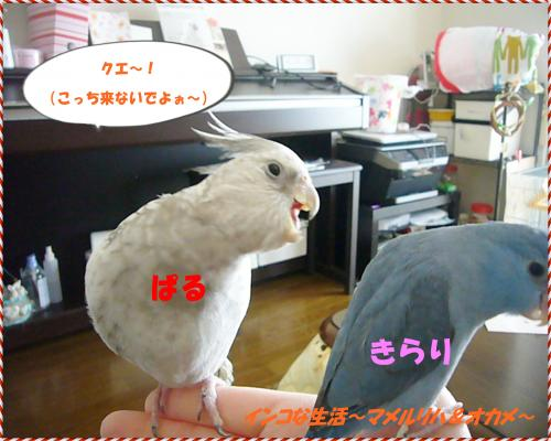 P1080199_convert_20130226204348.jpg