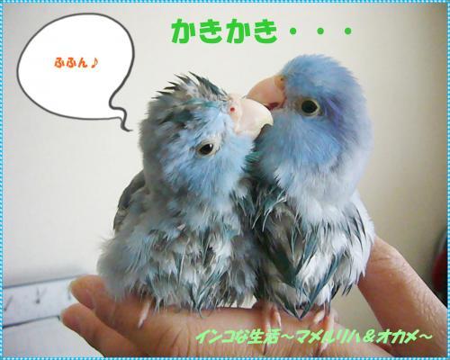 P1080360_convert_20130323173326.jpg