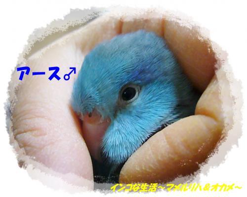 P1080385_convert_20130407094717.jpg