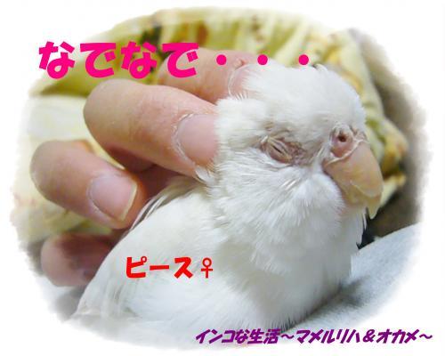 P1080424_convert_20130407095159.jpg