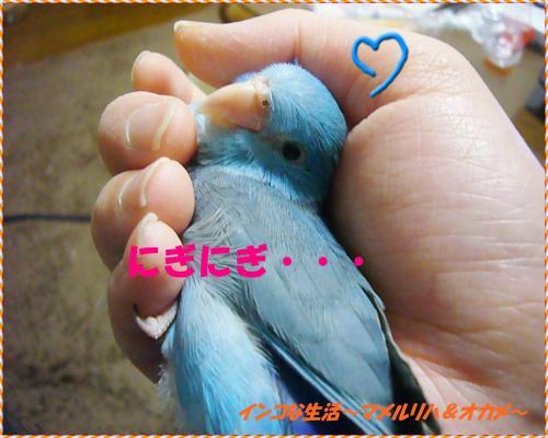P1080467_convert_20130407095324.jpg