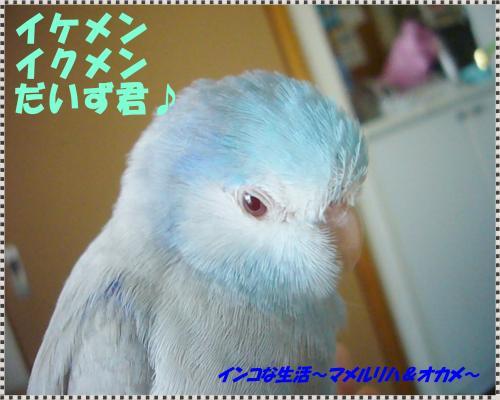 P1080662_convert_20130611141811.jpg