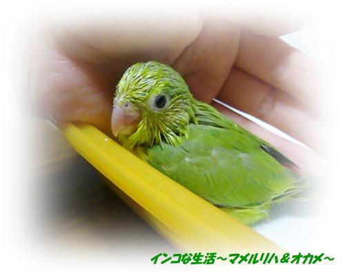 P1080791_convert_20130430224932.jpg