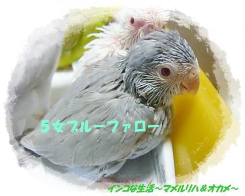 P1080938_convert_20130510221239.jpg