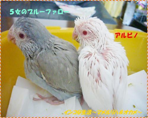 P1080974_convert_20130510220446.jpg
