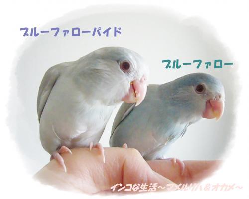 P1080998_convert_20130510215947.jpg