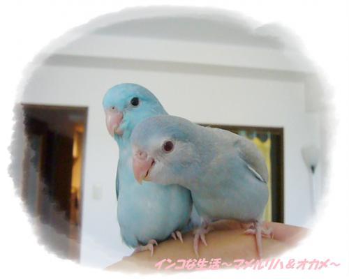 P1090113_convert_20130517223300.jpg