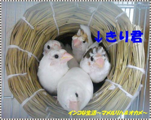 P1090166_convert_20130621215233.jpg