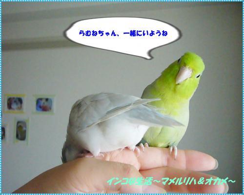 P1090334_convert_20130705103041.jpg