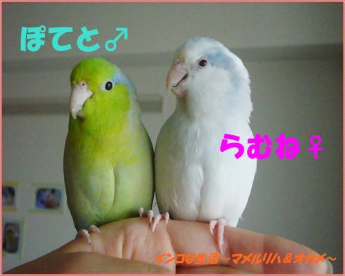 P1090335_convert_20130705103107.jpg