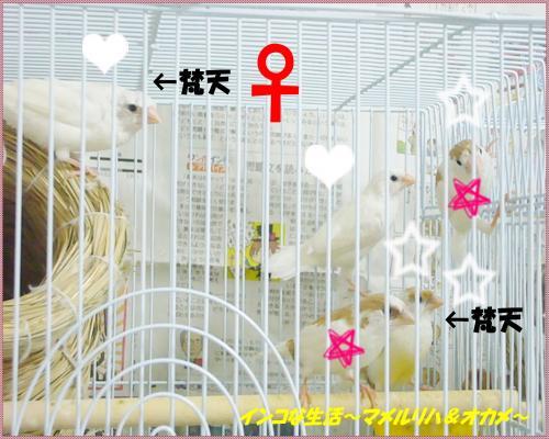 P1090472_convert_20130621215611.jpg