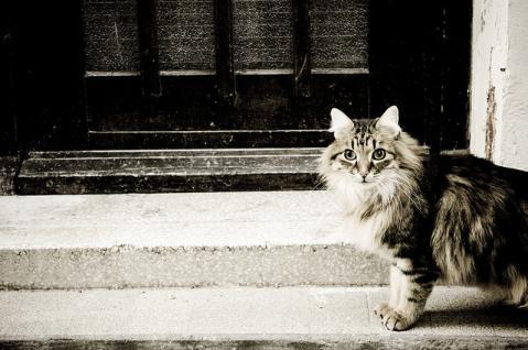 猫 街 風景 何気ない