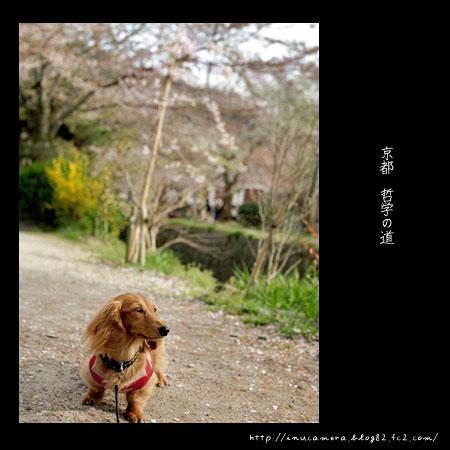 walks_033_05.jpg