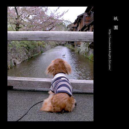 walks_21_2.jpg