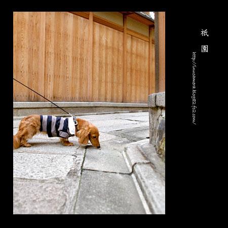 walks_21_3.jpg