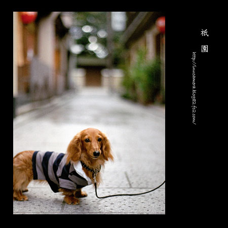 walks_21_5.jpg