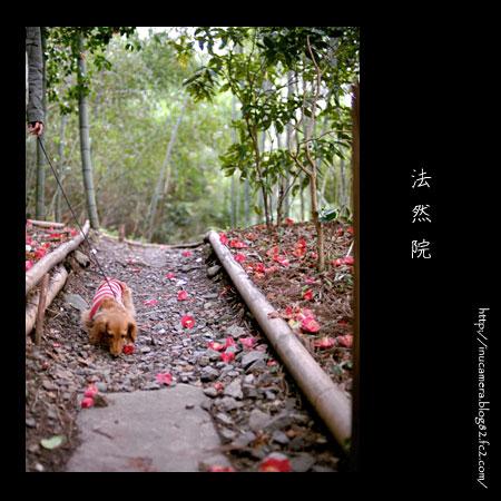 walks_24_2.jpg