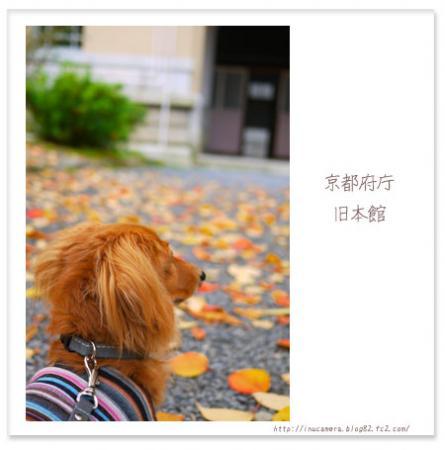 walks_52_13.jpg