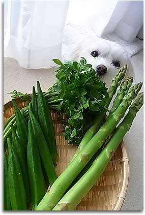 お野菜05515