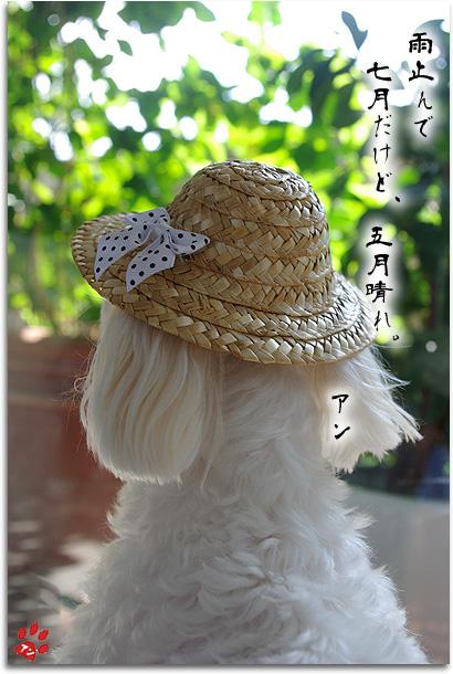 アン川柳(五月晴れ)