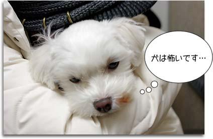 犬は怖いです・・・