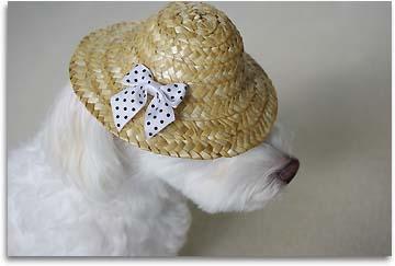アンの帽子1