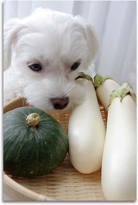 白茄子とアン。
