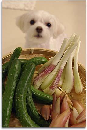 夏野菜とアン