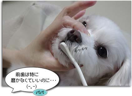 アンの歯磨き。4