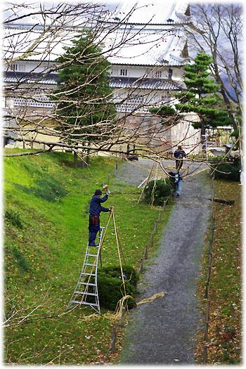 金沢城の雪吊り