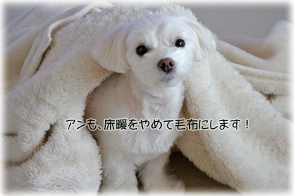 毛布のアンちゃん