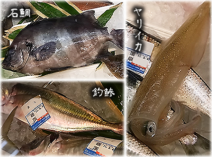 魚たち0304