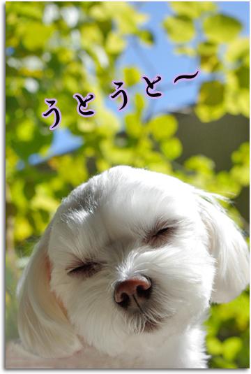春眠ちゃん2